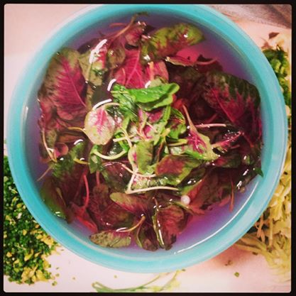 Red Amaranth being cleaned in cold water before being dropped in the warm broth