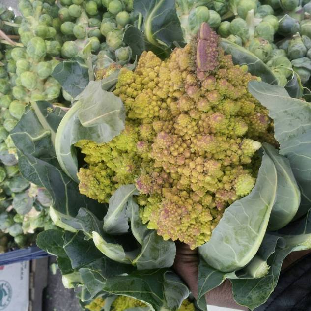 fresh romanesca -from the farmers market to your plate!